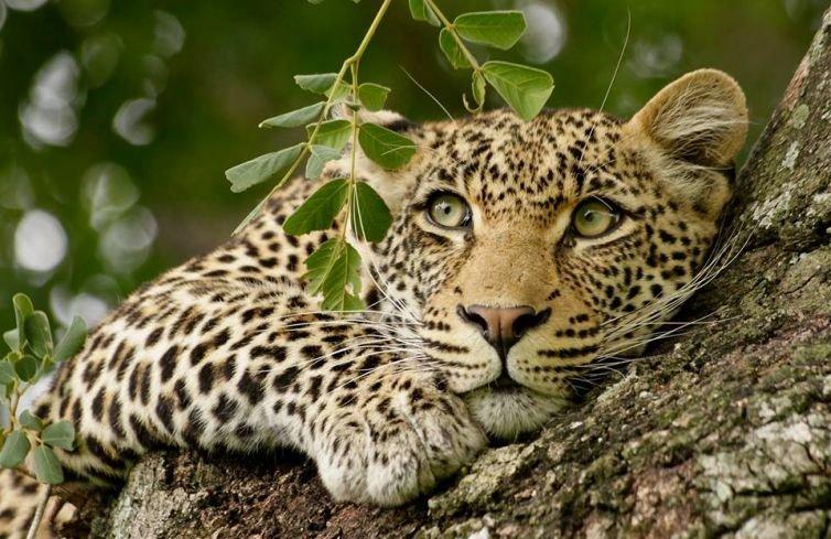 safari-v-keniya-ft-02